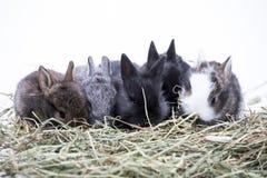 νεολαίες κουνελιών Στοκ φωτογραφία με δικαίωμα ελεύθερης χρήσης