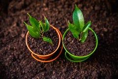 νεολαίες πράσινων φυτών Στοκ εικόνα με δικαίωμα ελεύθερης χρήσης