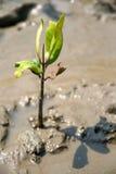νεολαίες φυτών Στοκ Φωτογραφία
