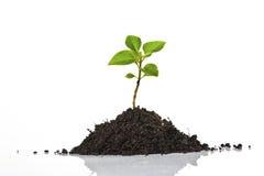 νεολαίες φυτών Στοκ εικόνες με δικαίωμα ελεύθερης χρήσης