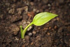 νεολαίες φυτών Στοκ φωτογραφίες με δικαίωμα ελεύθερης χρήσης