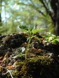 νεολαίες φυτών Στοκ Εικόνα