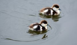 Νεοσσοί άνοιξη στη λίμνη Στοκ φωτογραφία με δικαίωμα ελεύθερης χρήσης