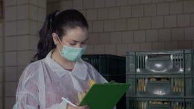 Νεοσσοί ελέγχου επιθεωρητών για τις ατέλειες και ασθένειες στο φάρμα πουλερικών απόθεμα βίντεο
