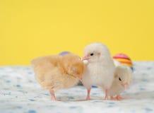 νεοσσοί Πάσχα τρία μικροσκοπικό Στοκ φωτογραφία με δικαίωμα ελεύθερης χρήσης