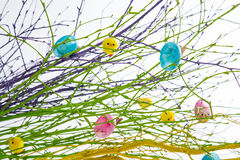 Νεοσσοί Colourfull στους κλάδους Στοκ Εικόνα