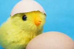 Νεοσσός μωρών και ραγισμένο αυγό στο κεφάλι του Στοκ φωτογραφίες με δικαίωμα ελεύθερης χρήσης