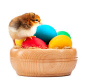 Νεοσσός RAD με τα αυγά Πάσχας. απομονωμένος στο λευκό Στοκ φωτογραφία με δικαίωμα ελεύθερης χρήσης