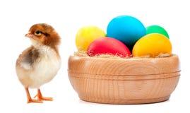 Νεοσσός RAD με τα αυγά Πάσχας. απομονωμένος στο λευκό Στοκ Εικόνες