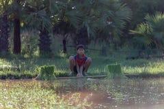 νεολαίες αγροτών Στοκ Εικόνες