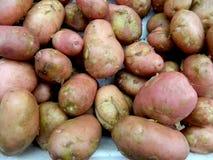 νεολαίες πατατών στοκ φωτογραφία