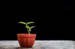 νεολαίες πράσινων φυτών Στοκ εικόνες με δικαίωμα ελεύθερης χρήσης