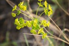 νεολαίες πράσινων φυτών Στοκ φωτογραφία με δικαίωμα ελεύθερης χρήσης