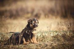 νεολαίες σκυλιών Στοκ Φωτογραφία