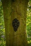 Νεράιδα Glen και ένα τρομακτικό πρόσωπο σε ένα δέντρο στο πάρκο Troon Σκωτία του Glen Fullarton νεράιδων στοκ φωτογραφίες με δικαίωμα ελεύθερης χρήσης