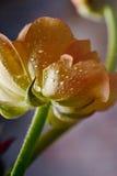 νεραγκούλες Στοκ Φωτογραφίες
