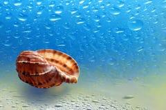 Νεροχύτης θάλασσας που στηρίζεται επάνω στο τραγούδι Στοκ Εικόνες