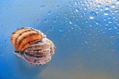 Νεροχύτης θάλασσας που στηρίζεται επάνω στο τραγούδι Στοκ φωτογραφία με δικαίωμα ελεύθερης χρήσης