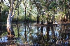 Νερό αντανάκλασης δέντρων Στοκ φωτογραφίες με δικαίωμα ελεύθερης χρήσης