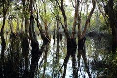 Νερό αντανάκλασης δέντρων Στοκ φωτογραφία με δικαίωμα ελεύθερης χρήσης