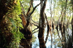 Νερό αντανάκλασης δέντρων Στοκ Φωτογραφίες
