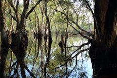 Νερό αντανάκλασης δέντρων Στοκ εικόνα με δικαίωμα ελεύθερης χρήσης