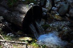 Νερό από έναν κορμό Στοκ Εικόνα