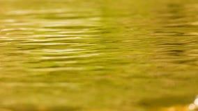 Νερό επιφάνειας - σαφές ρεύμα βουνών Στοκ Φωτογραφία