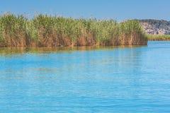 Νερό λιμνών με τον κάλαμο Στοκ φωτογραφία με δικαίωμα ελεύθερης χρήσης