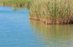Νερό λιμνών με τον κάλαμο Στοκ Φωτογραφία