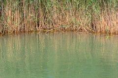 Νερό λιμνών με τον κάλαμο Στοκ Εικόνα