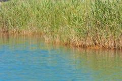 Νερό λιμνών με τον κάλαμο Στοκ εικόνα με δικαίωμα ελεύθερης χρήσης