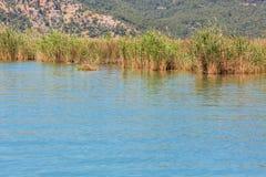 Νερό λιμνών με τον κάλαμο Στοκ φωτογραφίες με δικαίωμα ελεύθερης χρήσης