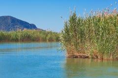 Νερό λιμνών με το έλος καλάμων χλόης καλάμων φυσικό Στοκ Εικόνες
