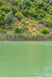 Νερό λιμνών με το θερινό τοπίο χλόης καλάμων Στοκ Φωτογραφίες