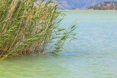 Νερό λιμνών με το θερινό τοπίο χλόης καλάμων Στοκ Φωτογραφία