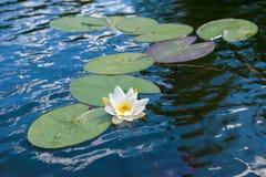 Νερό και λουλούδι Στοκ φωτογραφίες με δικαίωμα ελεύθερης χρήσης
