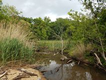 Νερό και χλόες και δέντρα στον υγρότοπο ή το έλος στοκ φωτογραφία