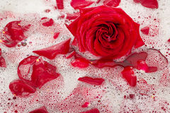 Νερό λουτρών με τα ροδαλά πέταλα Στοκ Εικόνα