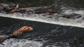Νερό ποταμού που ρέει στους βράχους και τους κλάδους δέντρων Ποταμός Strymonas, Σέρρες βόρεια Ελλάδα απόθεμα βίντεο