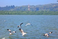 Νερό πουλιών στοκ φωτογραφία με δικαίωμα ελεύθερης χρήσης