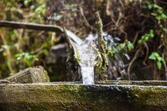 Νερό που ρέει από το σωλήνα μπαμπού στοκ φωτογραφία