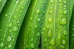 Νερό πτώσης στη φρέσκια φύση φύλλων Στοκ Εικόνες