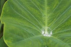 Νερό πτώσης στο φύλλο Lotus πράσινο Στοκ Εικόνες