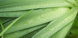 Νερό στα φύλλα Στοκ εικόνα με δικαίωμα ελεύθερης χρήσης