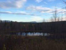 Νερό στον πιό forrest Στοκ φωτογραφίες με δικαίωμα ελεύθερης χρήσης