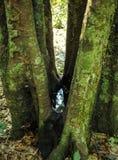 Νερό στο δέντρο Στοκ Φωτογραφίες