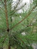Νερό στο δέντρο cristmas Στοκ Εικόνες