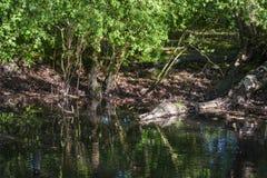 Νερό σύνδεσης κροκοδείλων Στοκ εικόνα με δικαίωμα ελεύθερης χρήσης