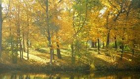 Νερό φθινοπώρου πάρκων λιμνών απόθεμα βίντεο